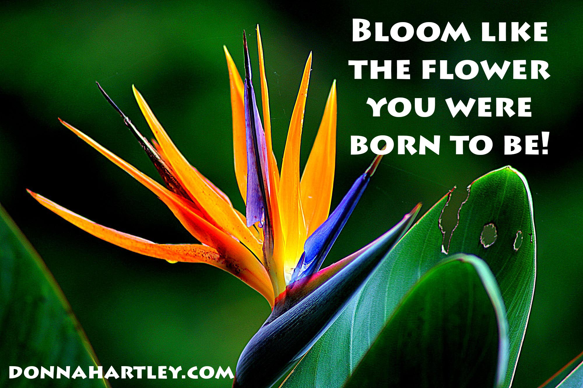 bloom where you were born Jamie johnson convinced 10 of  'hundreds of years ago you were either related to a  he explains three generations of his family were all 'born rich' after.